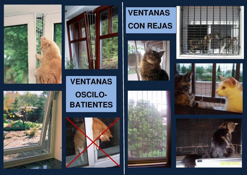 Protección Ventanas Balcones Y Accesos Para Gatos Adopciones Felinas Valencia