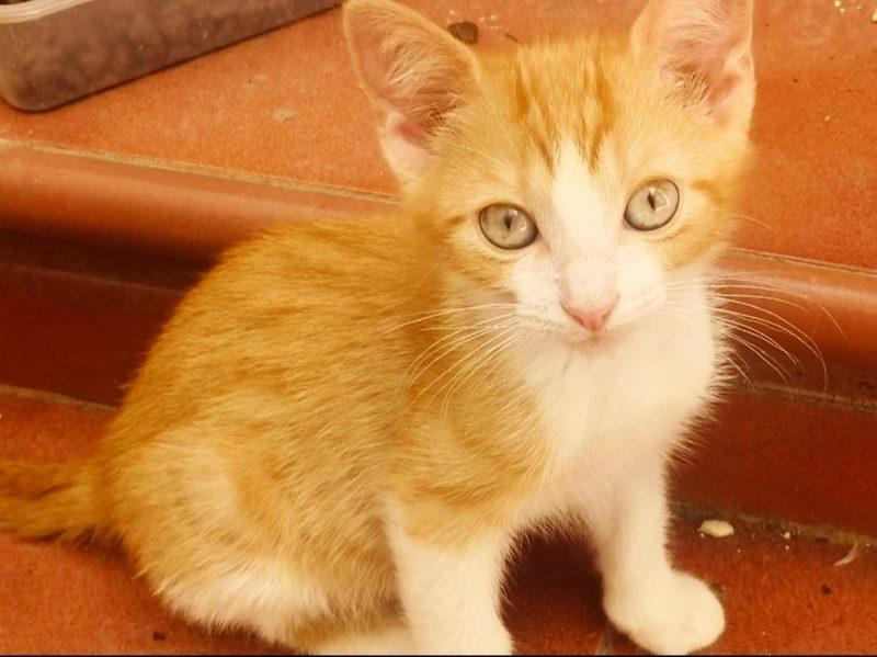 Gato Simba (1)