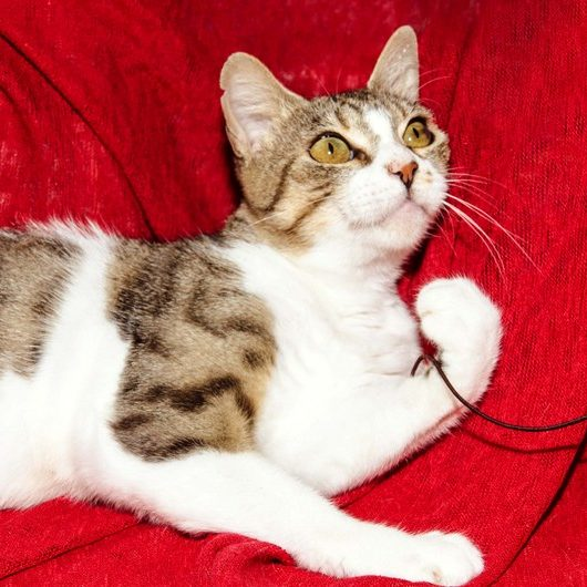Gatos En Adopción Adopciones Felinas Valencia