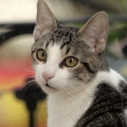 Gato Gus (1)