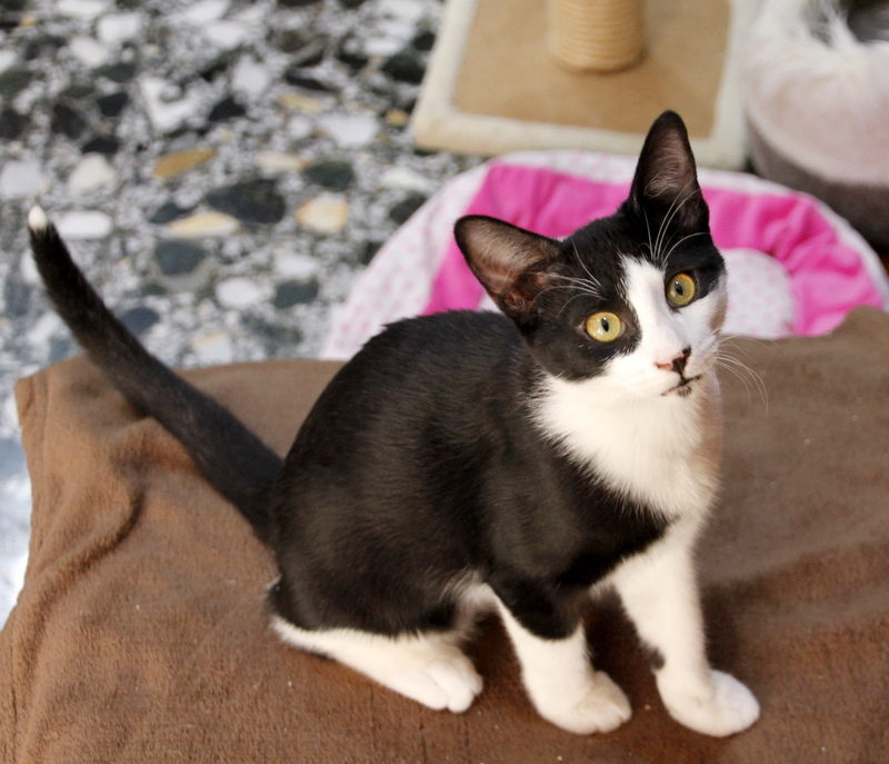 Gato Maki (36)