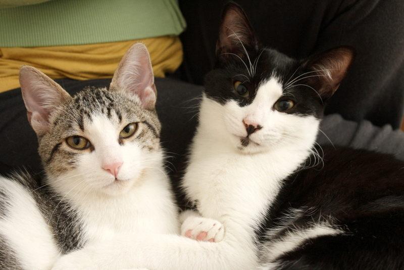 Gato Gus (12)
