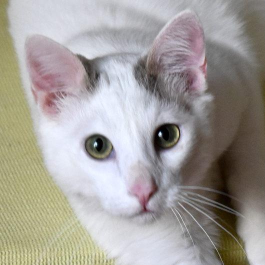 Gato Anakin (1)