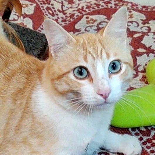 Gato Adán (1)