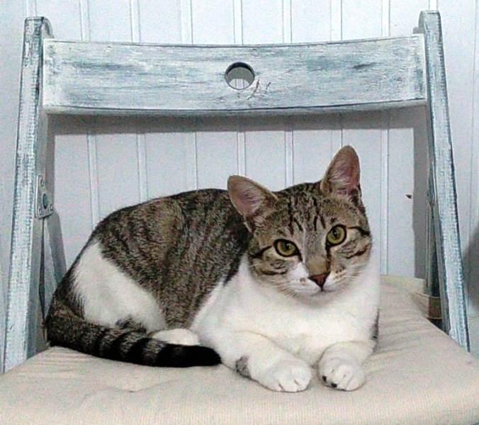Gato Amón (1)