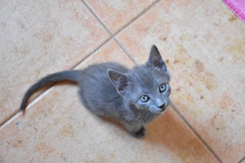 Gato Biru (1)