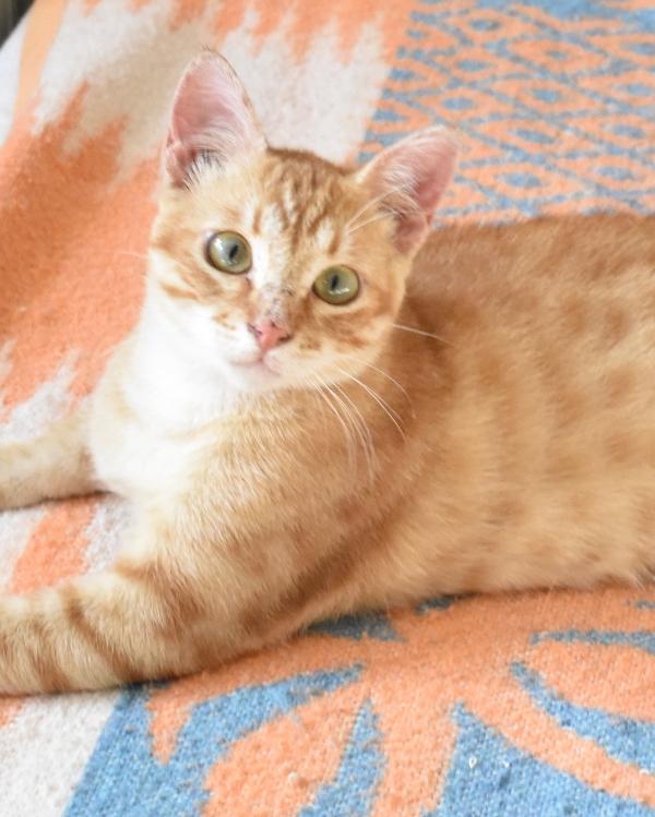 Gato Garret (1)