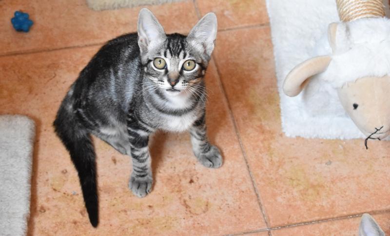 Gato Sancho (7)